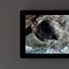 「19.3.6」ipadに油彩 14分11秒ループ 2019  撮影:加藤健