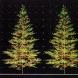 論文「樹形の構成原理と環境への対応」より(1985年)